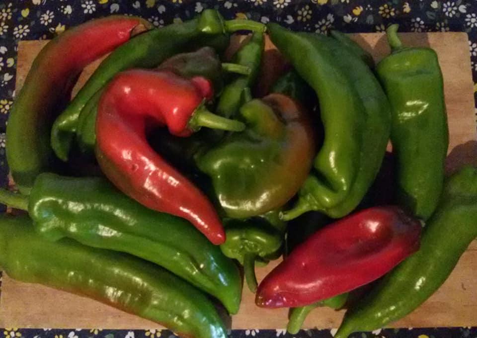 Orticoltura Zafferangelo, peperoni