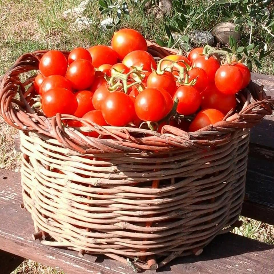 Orticoltura Zafferangelo, cesto di pomodori